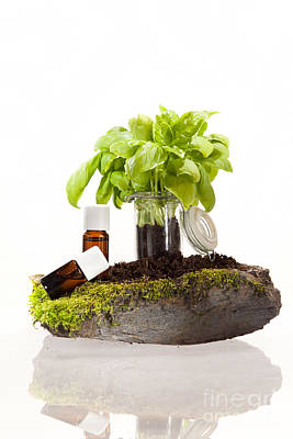 Aromatherapy Photograph - Essential Oil Of Basil by Wolfgang Steiner