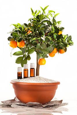 Essential Oils Of Orange Tree Art Print