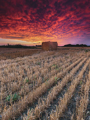 Sigma Photograph - Essex Hay At Sunrise by Cale Best