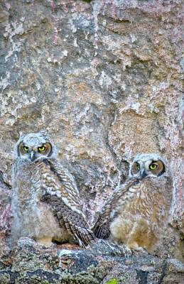 Photograph - Estes Park Owls by Al Reiner
