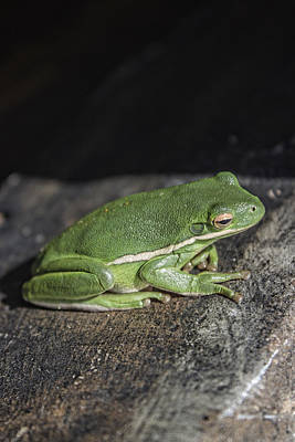 Photograph - Et Fingers And Toes Frog by Roberta Byram