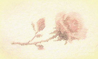 Photograph - Etched Red Rose by Linda Phelps