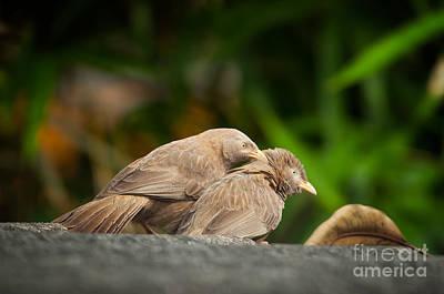 Photograph - Eternal Love by Venura Herath
