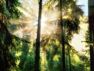 Photograph - Etheral Forest Light by Leland D Howard