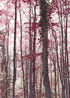 Ethereal Austrian Forest In Marsala Burgundy Wine Art Print