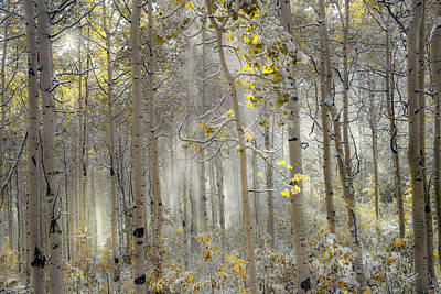Meaningful Art Photograph - Ethereal Autumn by Leland D Howard