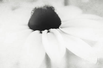 Photograph - Ethereal Black-eyed Susan Bw by Andrea Anderegg