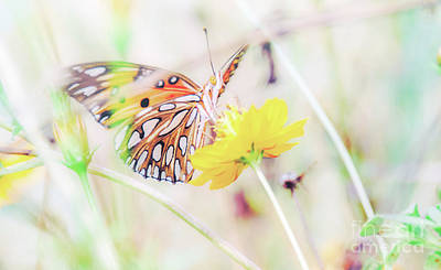 Photograph - Ethereal Butterfly by Andrea Anderegg