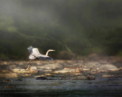 Photograph - Ethereal Landing by Bill Wakeley