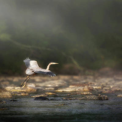 Birds In Flight Photograph - Ethereal Landing Square by Bill Wakeley