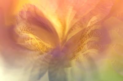 Photograph - Ethereal Life 20. Interior Ideas by Jenny Rainbow