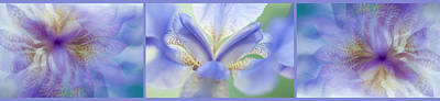 Photograph - Ethereal Life Of Iris 1. Triptych by Jenny Rainbow