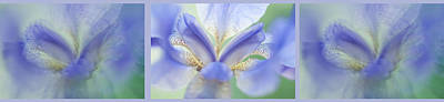 Photograph - Ethereal Life Of Iris. Triptych. Interior Ideas by Jenny Rainbow