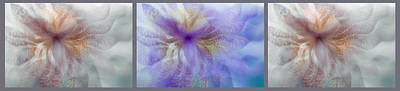 Photograph - Ethereal Life Of Iris. Triptych by Jenny Rainbow