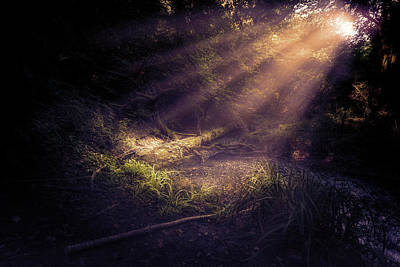 Photograph - Ethereal Light by Stewart Scott