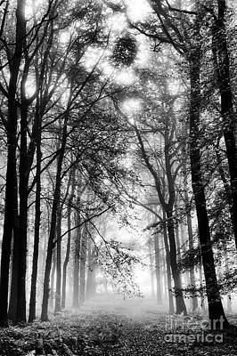 Photograph -  Ethereal Light by Tim Gainey