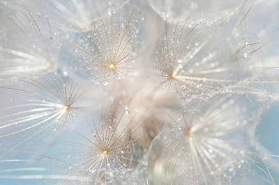 Photograph - Ethereal Lightness by Jenny Rainbow