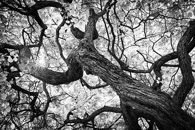 Photograph - Ethereal Maple by Scott Campbell