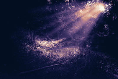 Photograph - Ethereal Purple by Stewart Scott