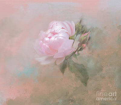 Digital Art - Ethereal Rose by Victoria Harrington