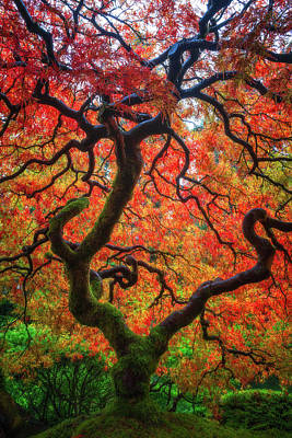 Print featuring the photograph Ethereal Tree Alive by Darren White