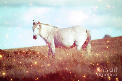 Photograph - Unicorn On Dartmoor by Toula Mavridou-Messer