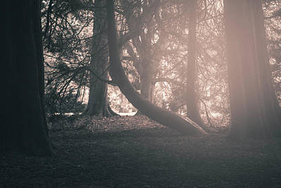 Photograph - Ethereal Woods by Stewart Scott