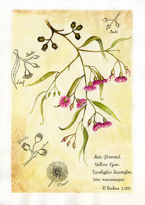 Eucalyptus Branch In  Classical Botanical Art Style Art Print by Victoria Yurkova