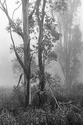 Photograph - Eucalyptus In Morning Fog by Alexander Kunz