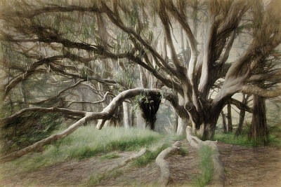 Photograph - Eucalyptus by Lana Trussell