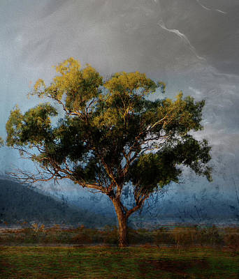 Photograph - Eucalyptus by Linde Townsend