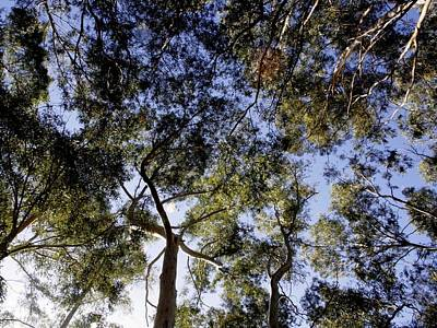 Painting - Eucalyptus Tree Canopy by Tracey Harrington-Simpson