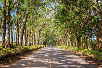 Town Photograph - Eucalyptus Tree Tunnel - Kauai Hawaii by Brian Harig