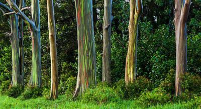 Eucalyptus Trees Print by Thorsten Scheuermann