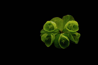 Photograph - Euphorbia by Keith Elliott