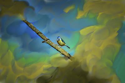 Photograph - Eurasian Blue Tit On Tree #h4 by Leif Sohlman