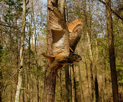 Photograph - Eurasian Eagle Owl In Flight by Chris Flees