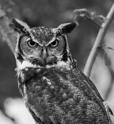 Digital Art - Eurasian Eagle Owl Monochrome by Chris Flees