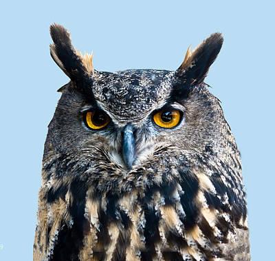 Photograph - Eurasian Eagle Owl Portrait by William Bitman