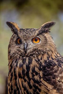 Photograph - Eurasian Eagle Owl Vertical by Teresa Wilson