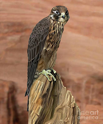 Digital Art - Eurasian Hobby Falcon by Walter Colvin