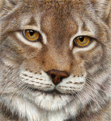 Colored Pencil Drawing - Eurasian Lynx by Pat Erickson