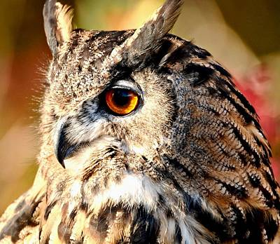 Photograph - Eurasion Eagle Owl by Amy McDaniel