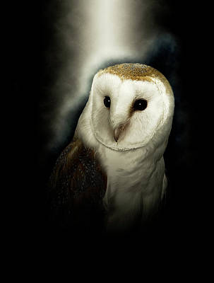 Photograph - European Barn Owl by Gordon Ripley