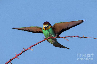 Digital Art - European Bee-eater by Liz Leyden