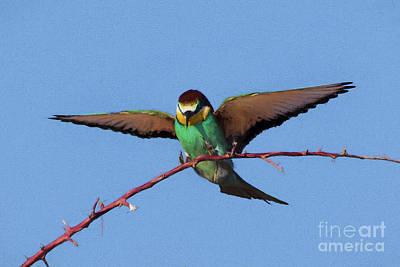 Digital Art - European Bee-eater by Liz Leyden