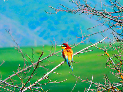 European #bee-eater Original