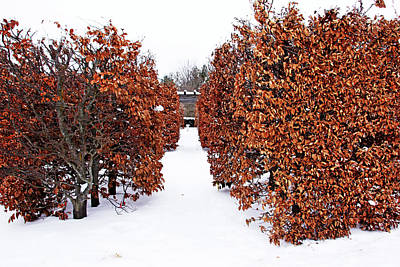 Photograph - European Beech Hedges by Debbie Oppermann