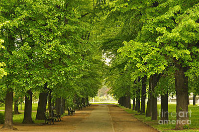 This Digital Art - European City Park With Benches In Spring Time by Caio Caldas