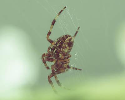 Photograph - European Garden Spider A by Jacek Wojnarowski